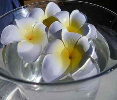 Floating Frangipani Flowers ( 4 )
